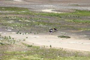 Tiere und Pflanzen im Nationalpark Wattenmeer brauchen mehr Schutz. Foto: Imke Zwoch